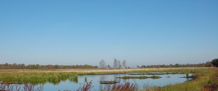 Das Hartshoper Moor